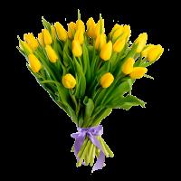 Букет из 51 желтого тюльпана с атласной лентой
