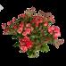 Букет из 9 кустовых роз с зеленью