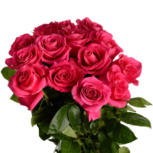 Букет из 15 розовых роз (90 см) с атласной лентой