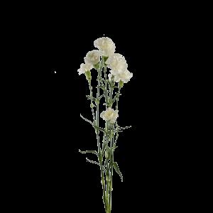 Гвоздика кустовая белая