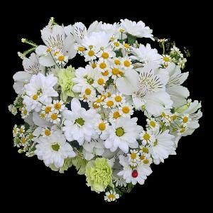 Букет из хризантемы, ромашки и кустовой гвоздики с  альстермерии